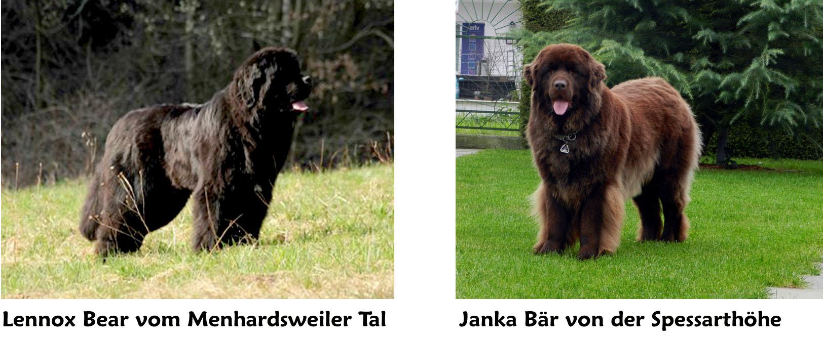 Lennox-und-Janka