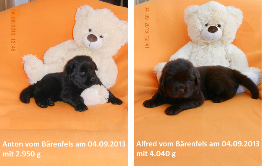 Teddy 040913