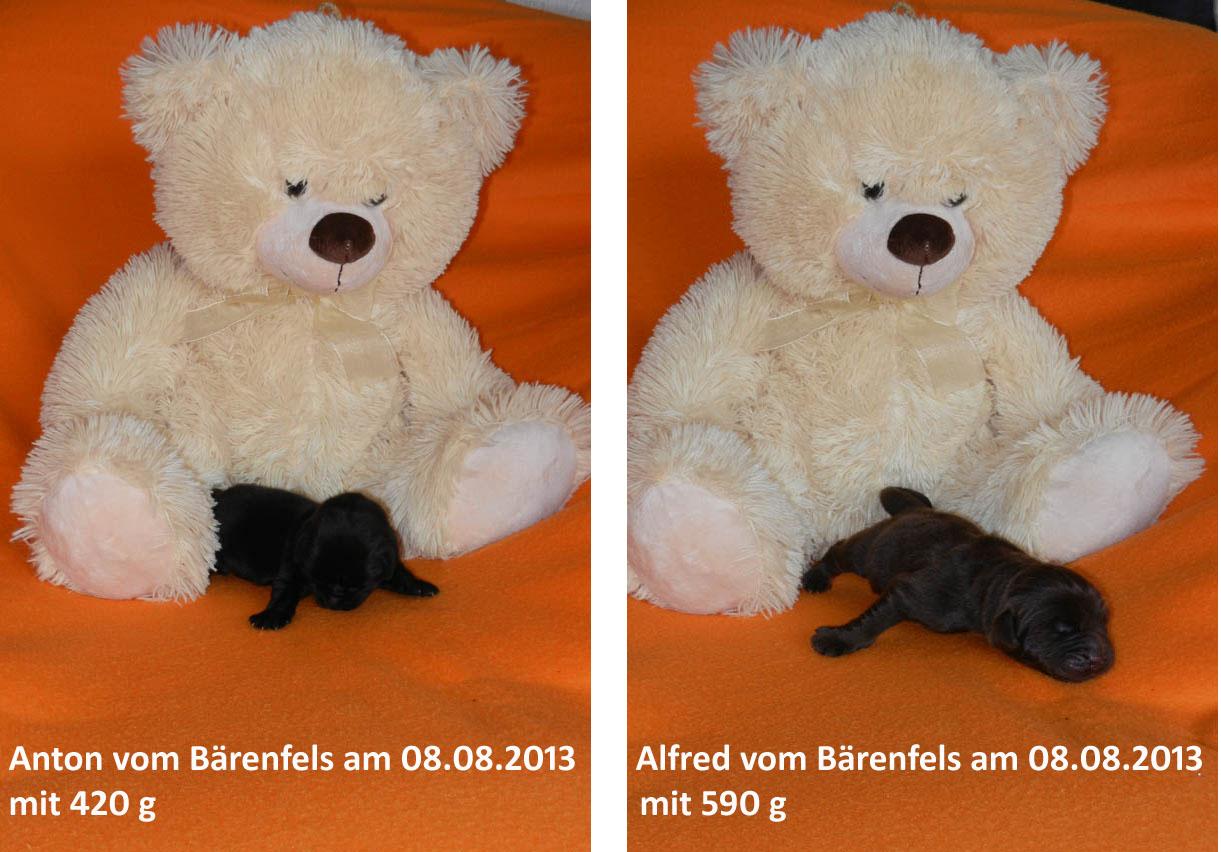 Teddy 08.08.2013