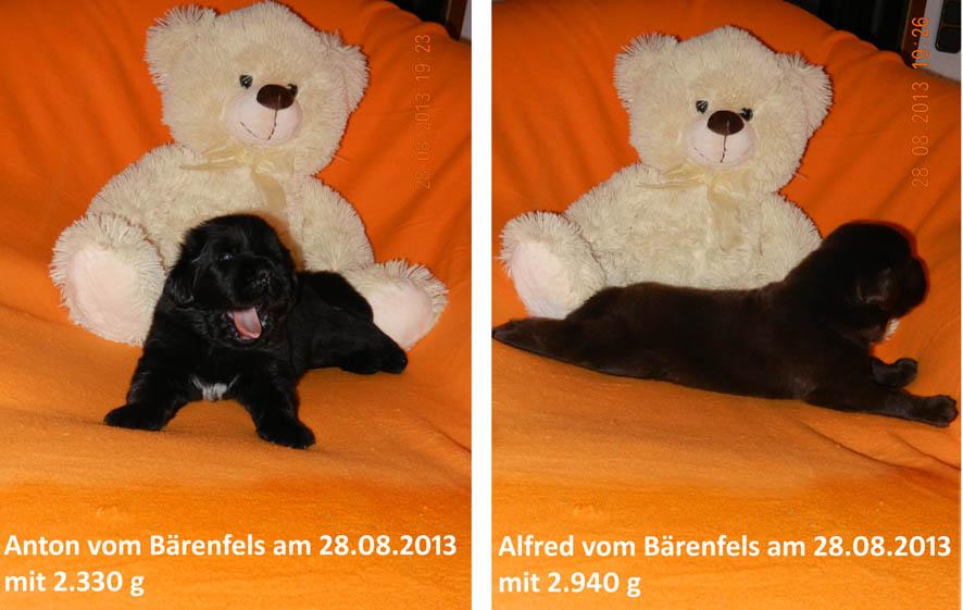 Teddy 280813