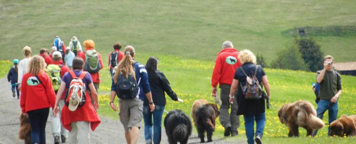 Bärentreffen 2012 in Seis