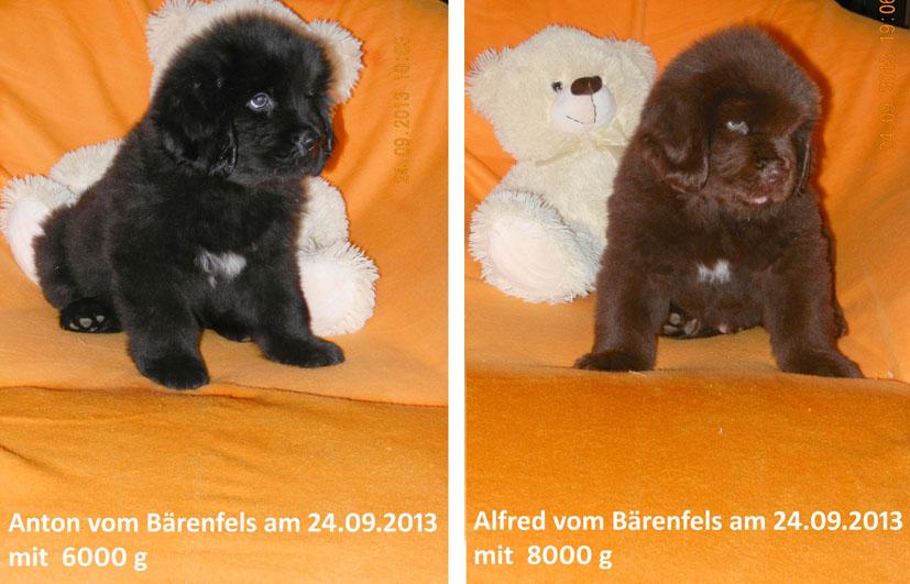 Teddy 2409131