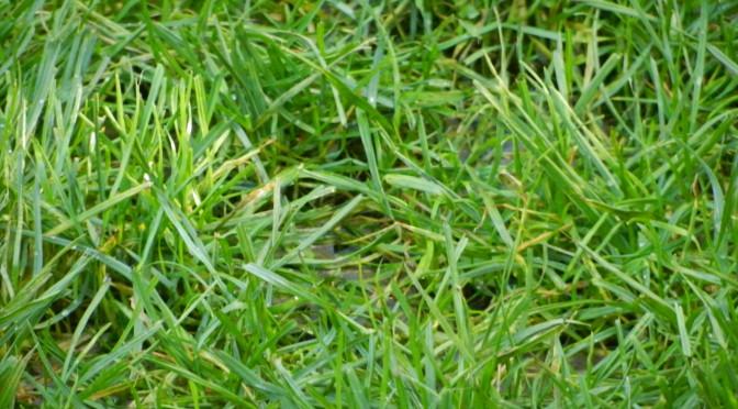 Unser Rasen