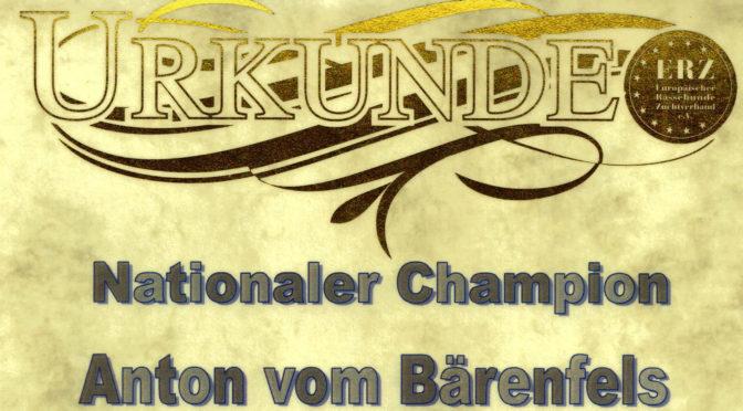 Nationaler Champion Anton vom Bärenfels
