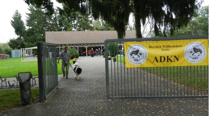 ADKN-Welpentreffen 2017 in Mainflingen