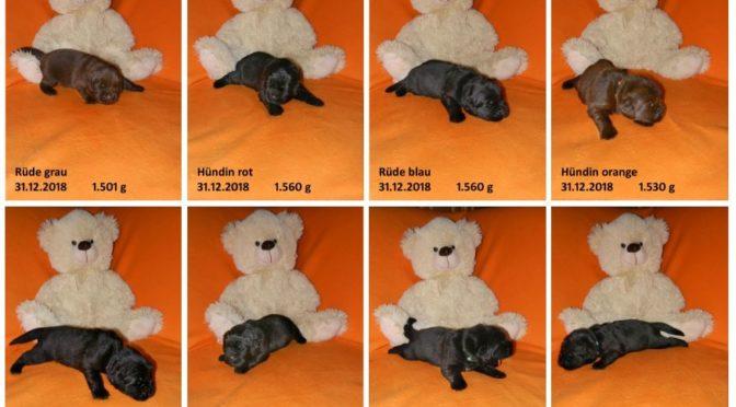 Teddybilder vom 31.12.2018