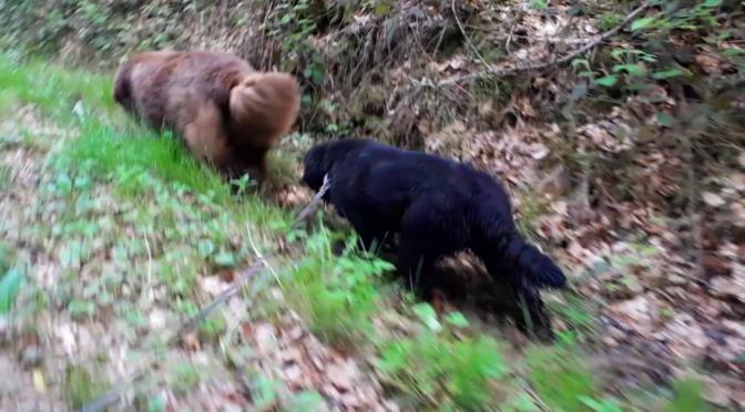 Waldspaziergang mit Elfriede und Alfred