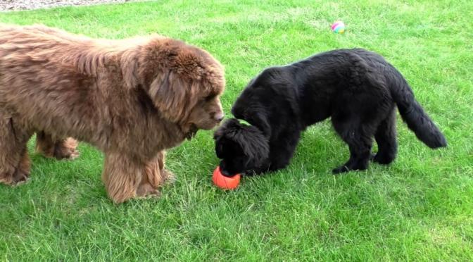 Elfriede und Alfred spielen Ball