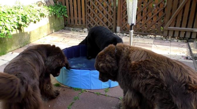 Hundepool zur Abkühlung