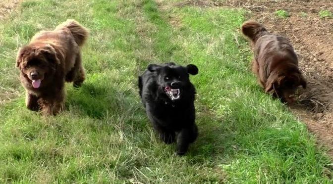 Unterwegs mit der Bärenbande