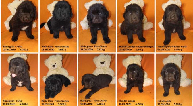 Teddybilder vom 25.09.2020