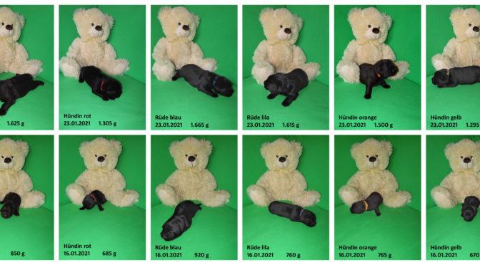 Teddybilder vom 23.01.2021
