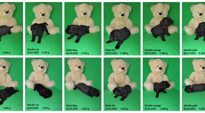 Teddybilder vom 30.01.2021