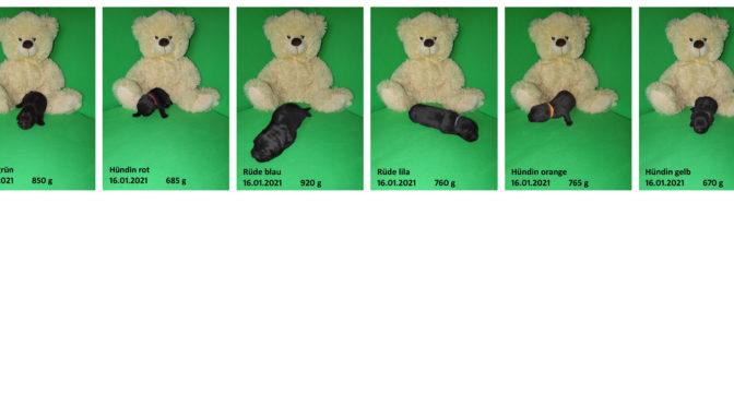 Teddybilder vom 16.01.2021