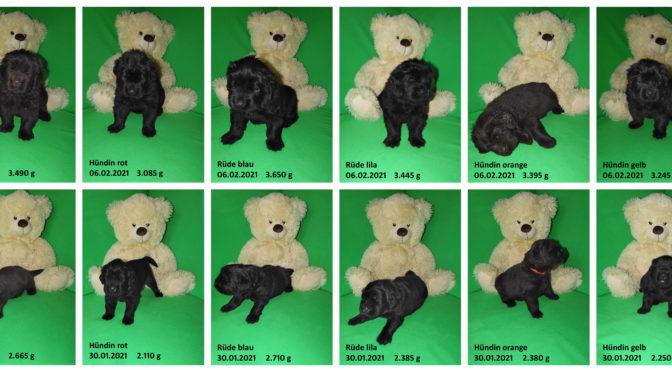 Teddybilder vom 06.02.2021