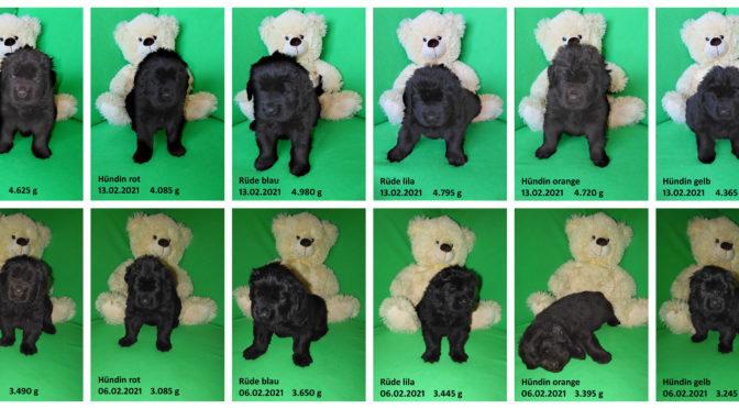 Teddybilder vom 13.02.2021